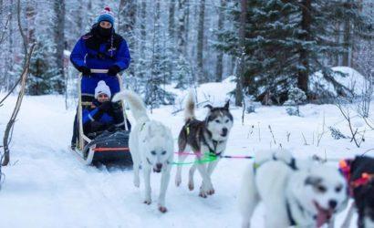 husky sled ride