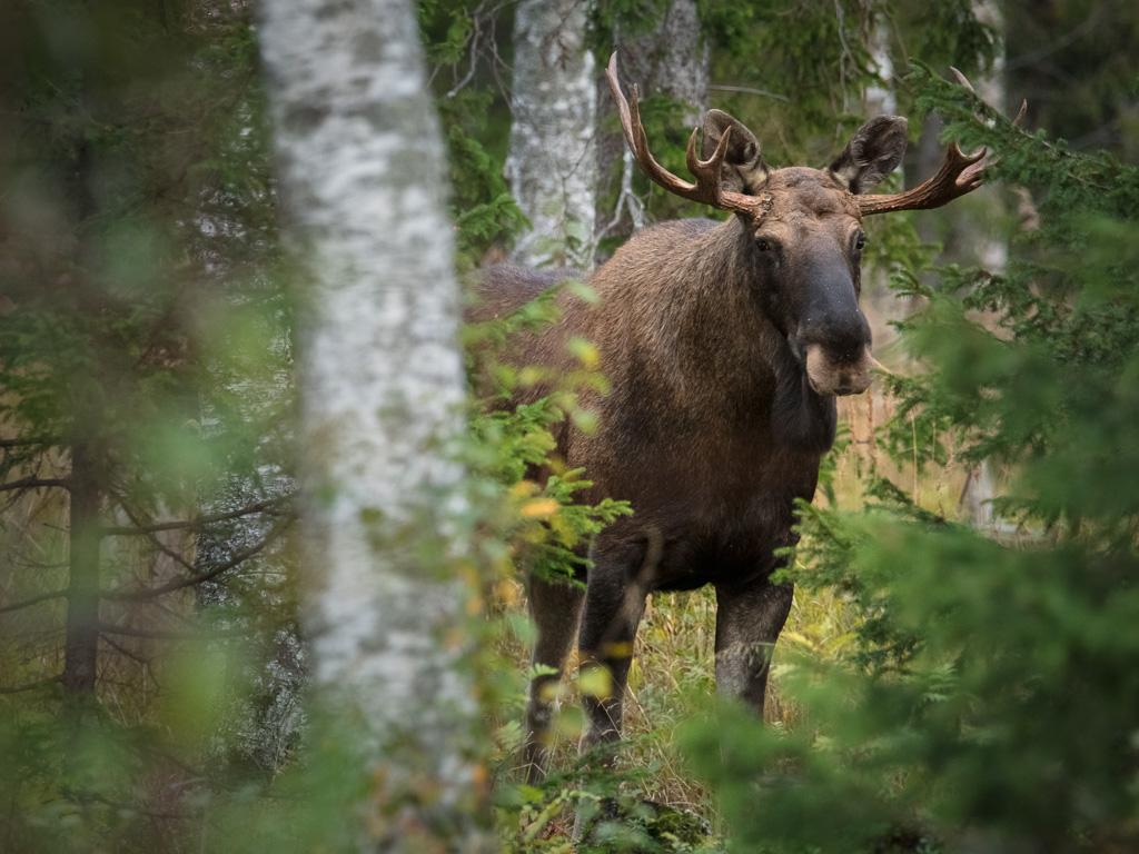 2019-09-17_Lapponia_Aurora_Finlandia_Tornio_0001_264A3502