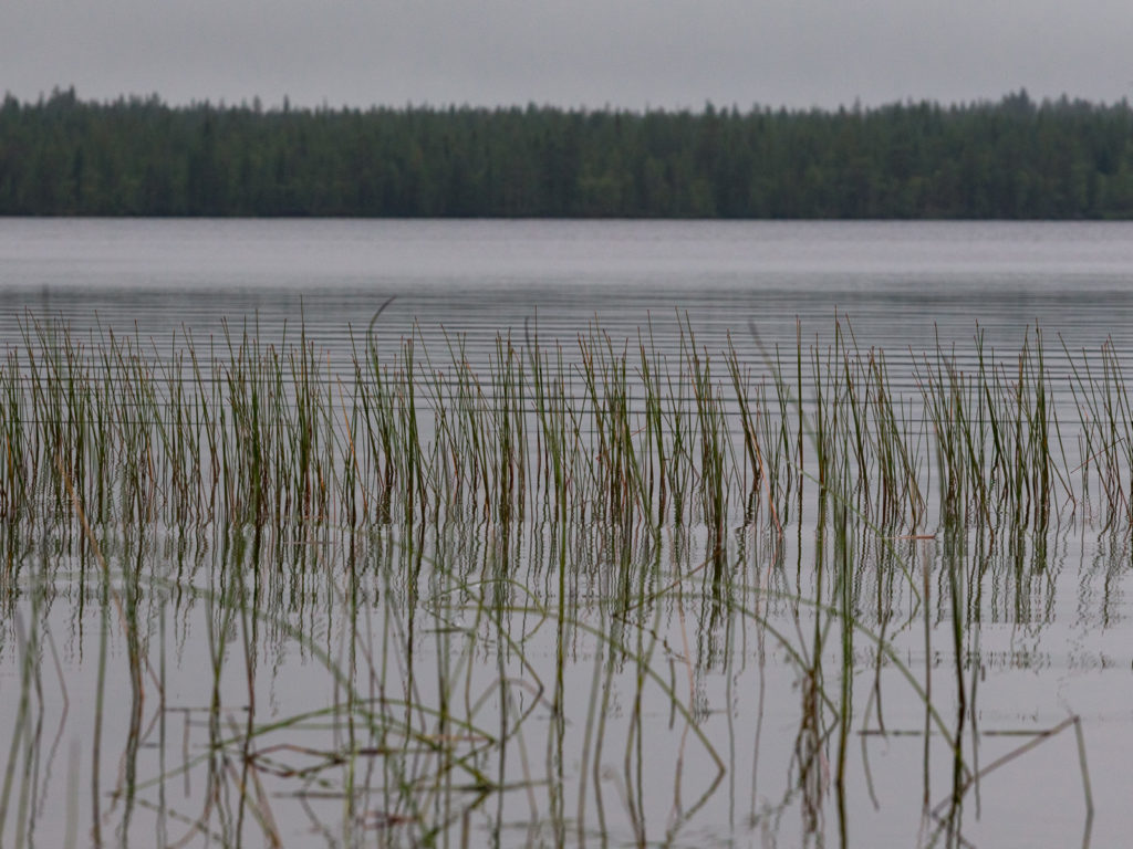 Lapponia_Finlandia_Svezia_Autunno_Foliage (11)