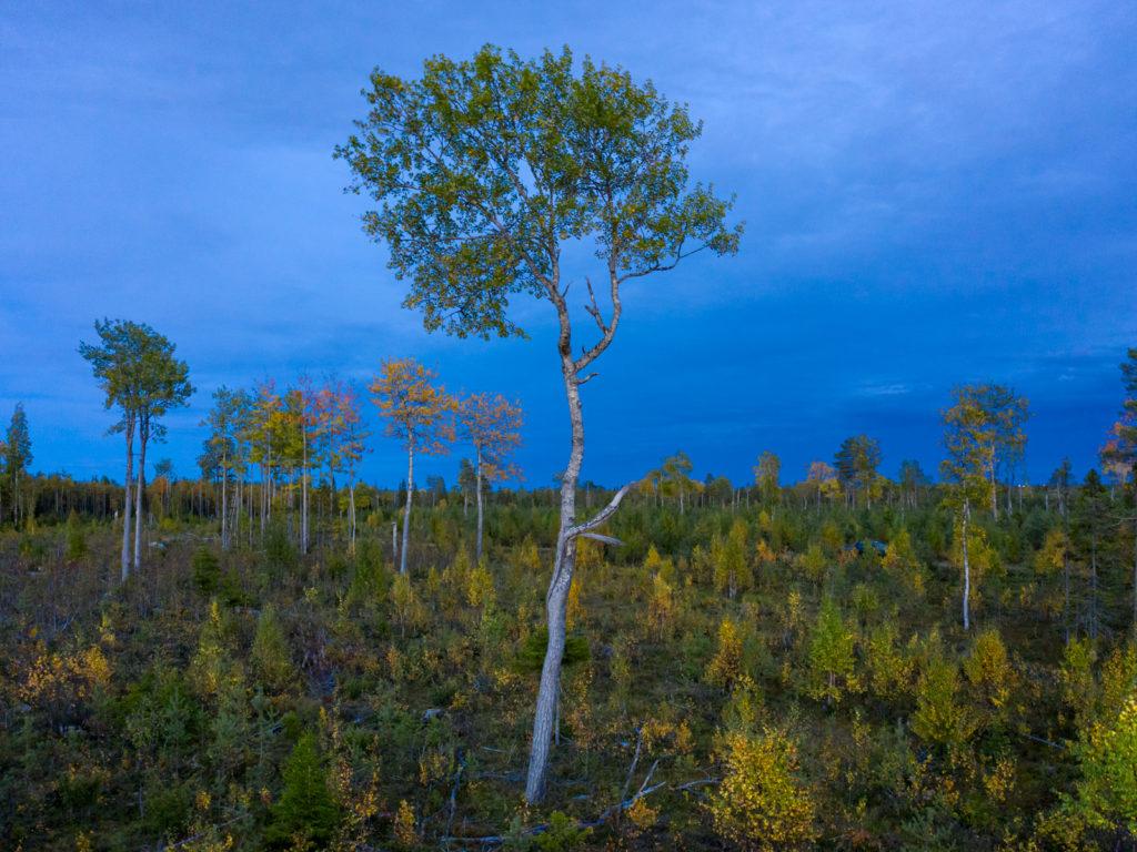 Lapponia_Finlandia_Svezia_Autunno_Foliage (14)