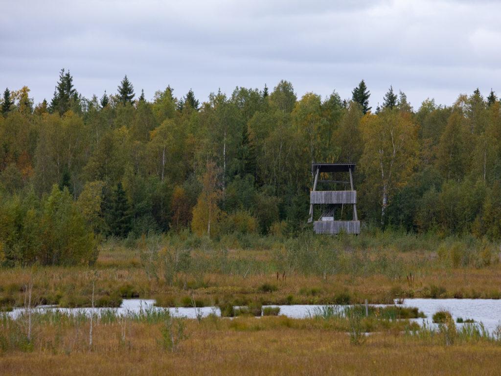 Lapponia_Finlandia_Svezia_Autunno_Foliage (32)