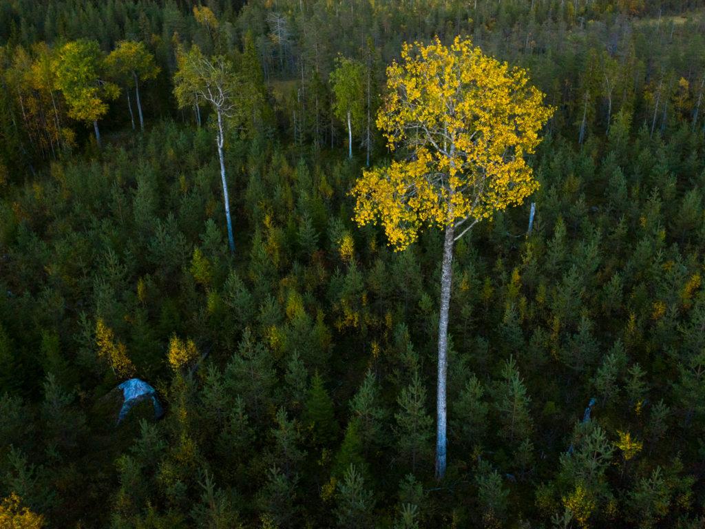 Lapponia_Finlandia_Svezia_Autunno_Foliage (35)