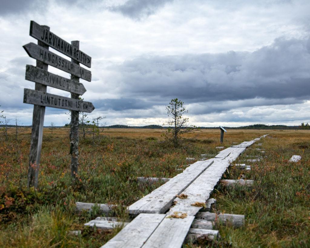 Lapponia_Finlandia_Svezia_Autunno_Foliage (38)