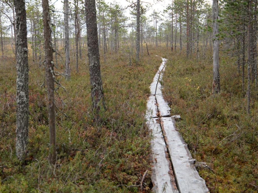 Lapponia_Finlandia_Svezia_Autunno_Foliage (40)