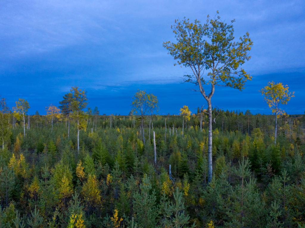 Lapponia_Finlandia_Svezia_Autunno_Foliage (65)