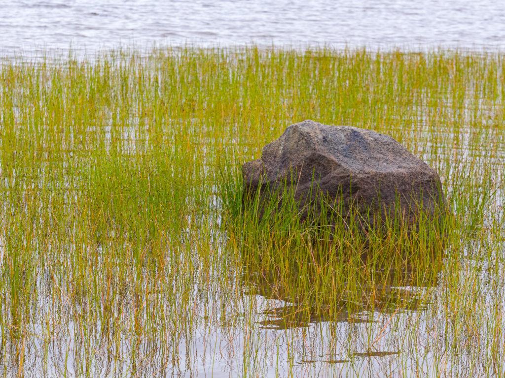 Lapponia_Finlandia_Svezia_Autunno_Foliage (66)