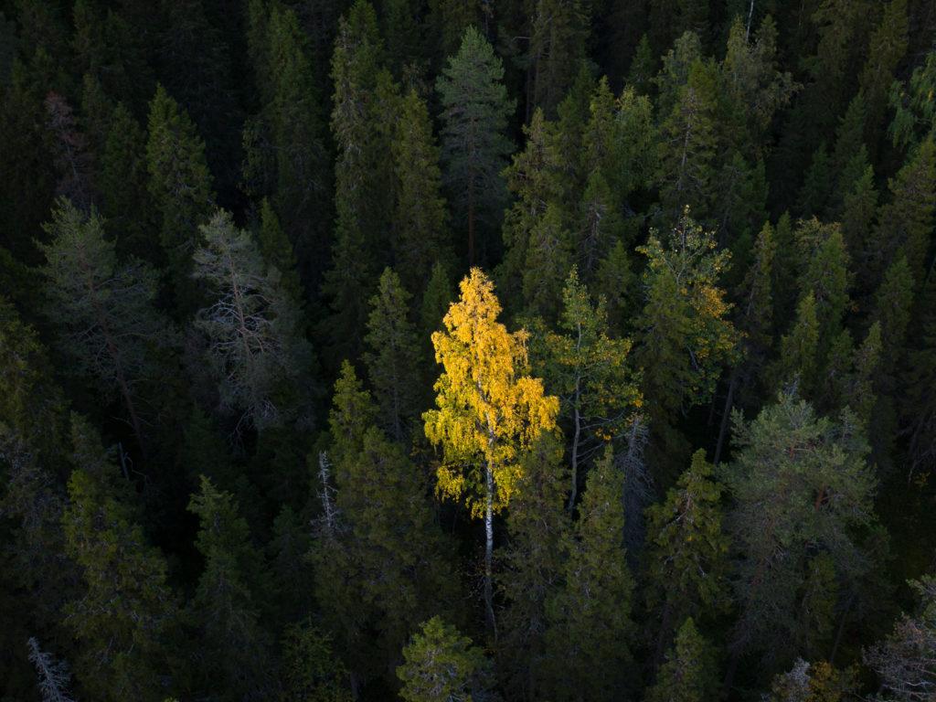 Lapponia_Finlandia_Svezia_Autunno_Foliage (75)